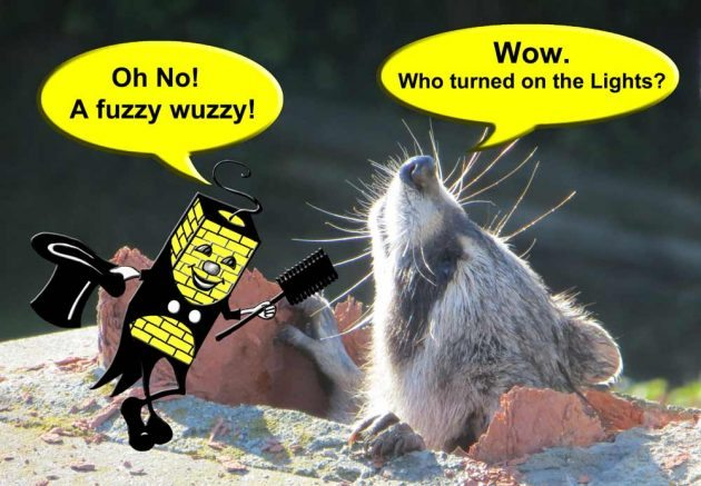 Critter Caper - A fuzzy wuzzy!